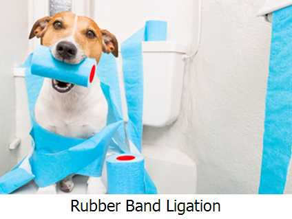 Rubber Band Ligation